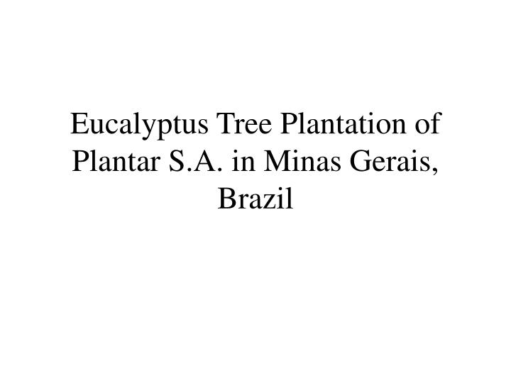 Eucalyptus tree plantation of plantar s a in minas gerais brazil