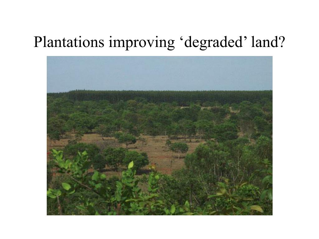 Plantations improving 'degraded' land?