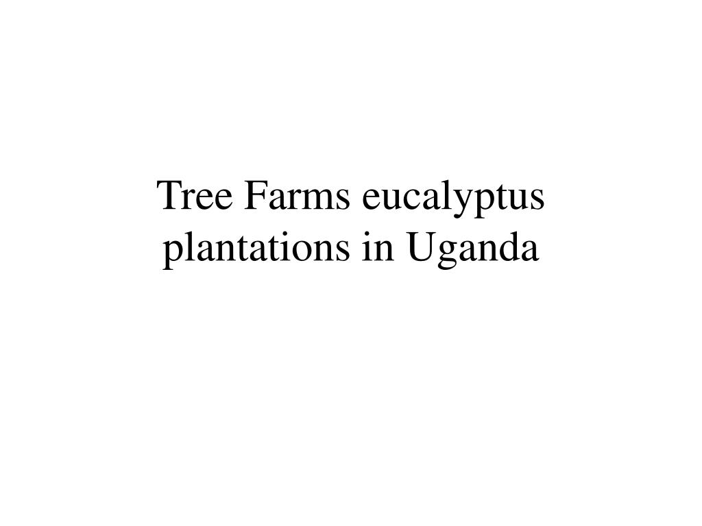 Tree Farms eucalyptus plantations in Uganda