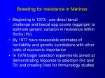 breeding for resistance in merinos