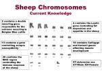 sheep chromosomes current knowledge