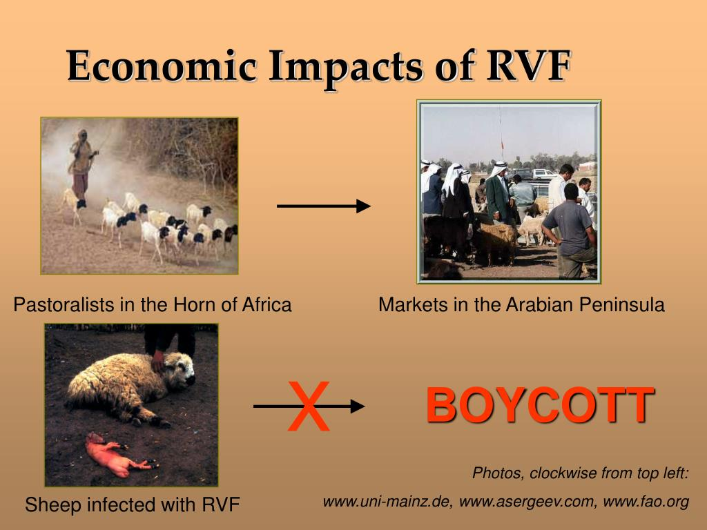 Economic Impacts of RVF