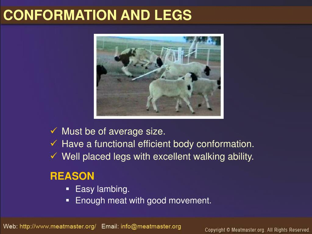 CONFORMATION AND LEGS