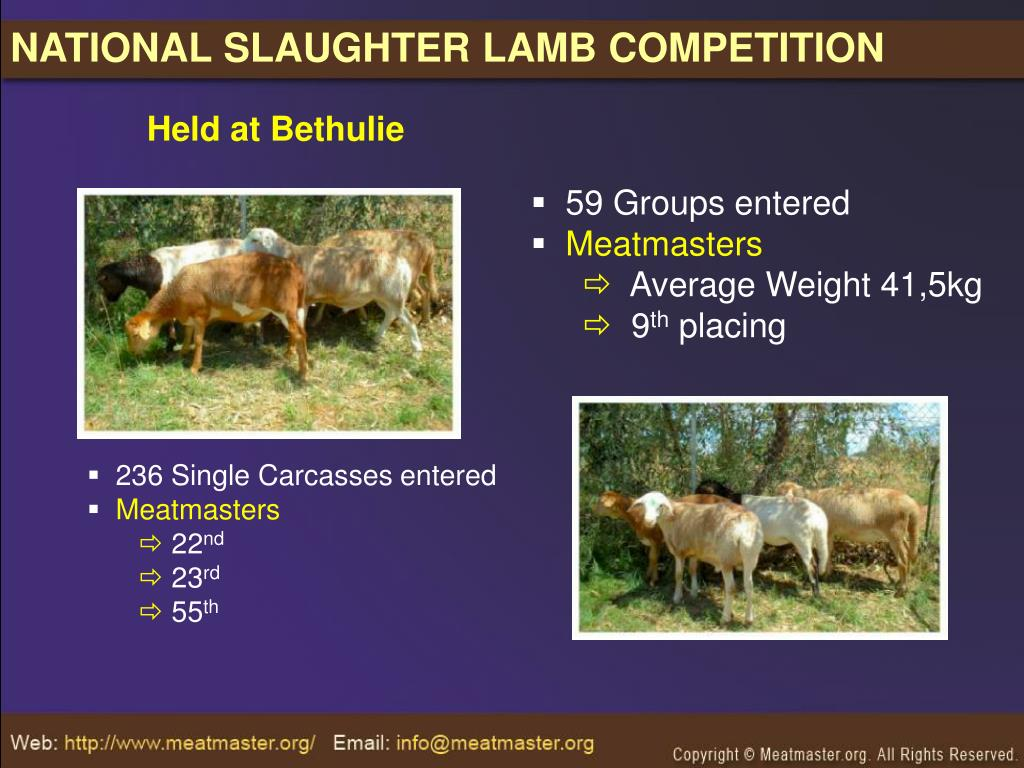 NATIONAL SLAUGHTER LAMB COMPETITION