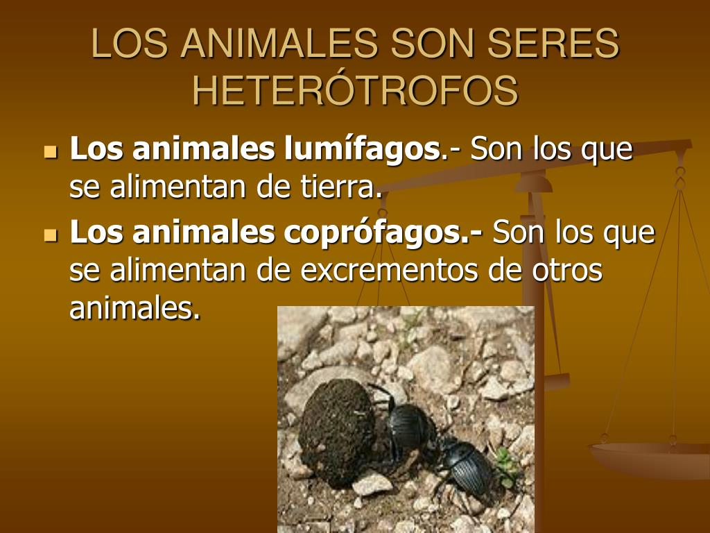 LOS ANIMALES SON SERES HETERÓTROFOS