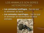 los animales son seres heter trofos8