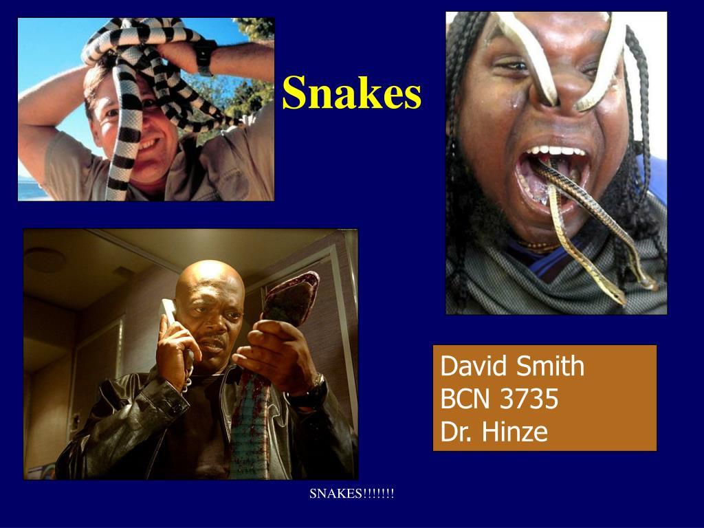 snakes l.