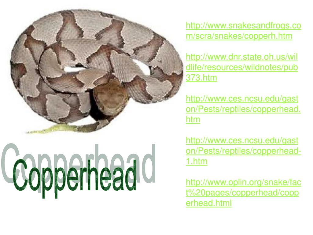 http://www.snakesandfrogs.com/scra/snakes/copperh.htm