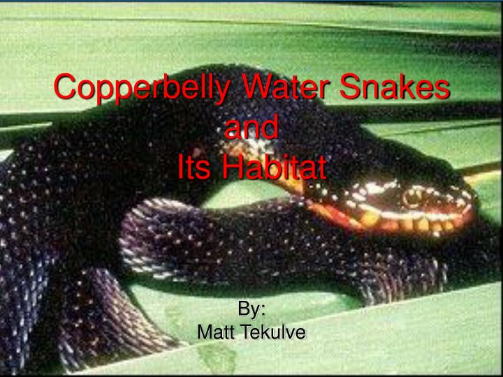 Copperbelly water snakes and its habitat