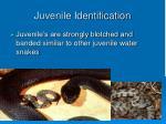 juvenile identification