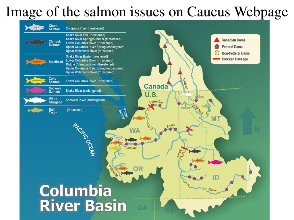 Image of the salmon issues on Caucus Webpage