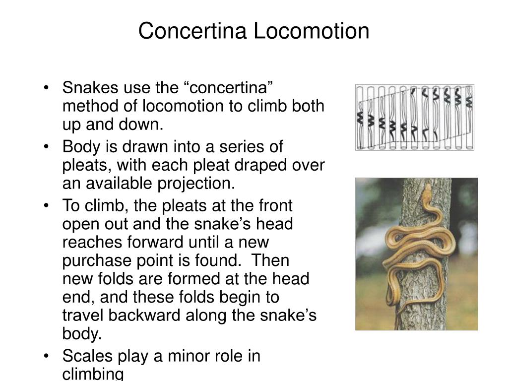 Concertina Locomotion
