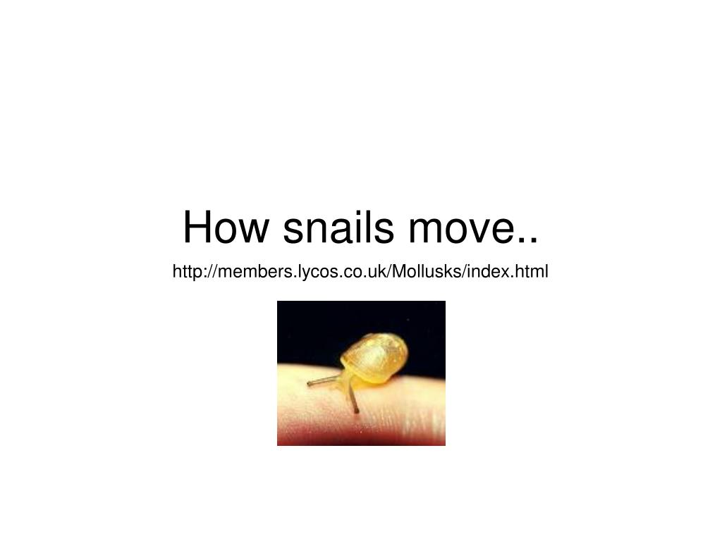 How snails move..