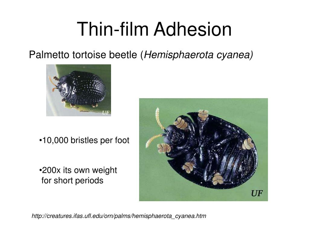 Thin-film Adhesion