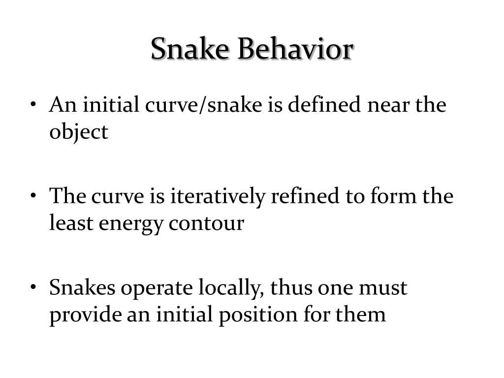 Snake Behavior