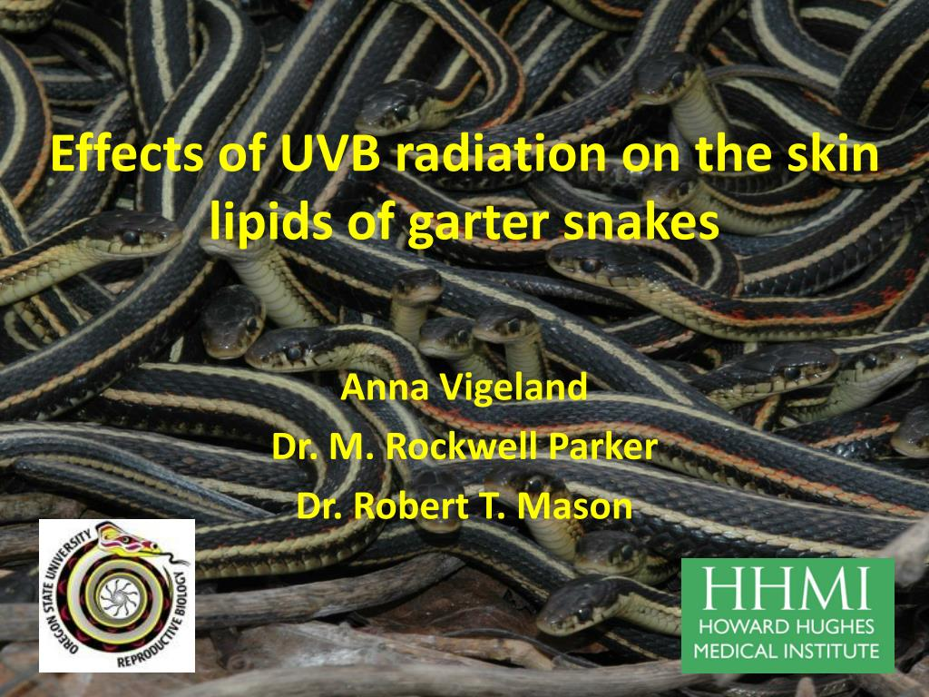 effects of uvb radiation on the skin lipids of garter snakes l.