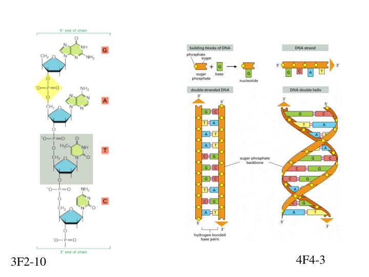 Ppt p1 1 cell diagram powerpoint presentation id1120844 4f4 3 ccuart Gallery
