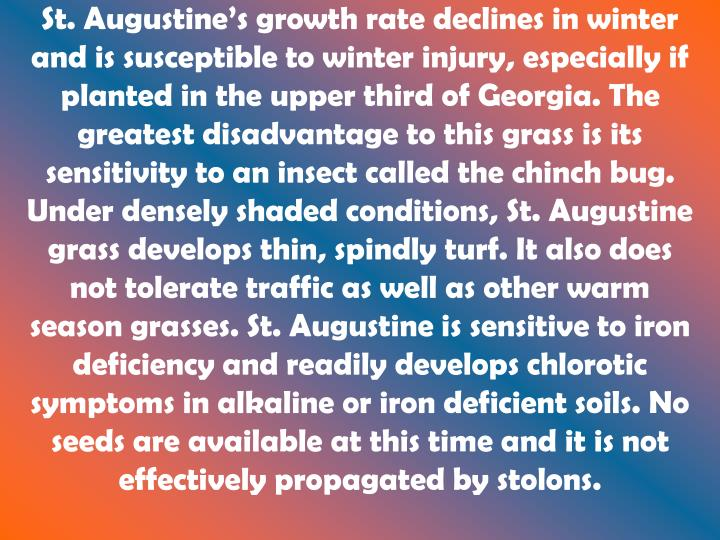 St. Augustine's growth rate declines in winter and is susceptible to winter injury, especially if planted in the upper third of Georgia. The greatest disadvantage to this grass is its sensitivity to an insect called the chinch bug. Under densely shaded conditions, St. Augustine grass develops thin, spindly turf. It also does not tolerate traffic as well as other warm season grasses. St. Augustine is sensitive to iron deficiency and readily develops chlorotic symptoms in alkaline or iron deficient soils. No seeds are available at this time and it is not effectively propagated by stolons.