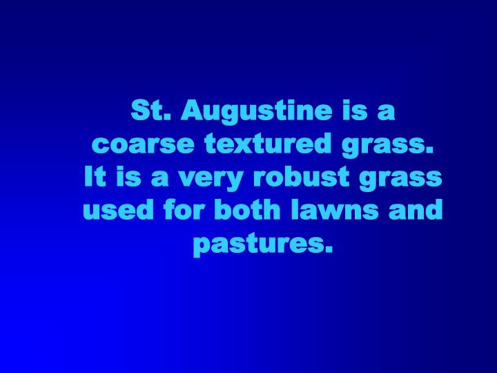 St. Augustine is a coarse textured grass. It is a very robust grass used for both lawns and pastures.