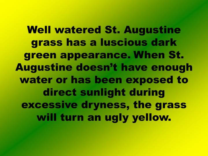 Well watered St. Augustine grass has a luscious dark green appearance.
