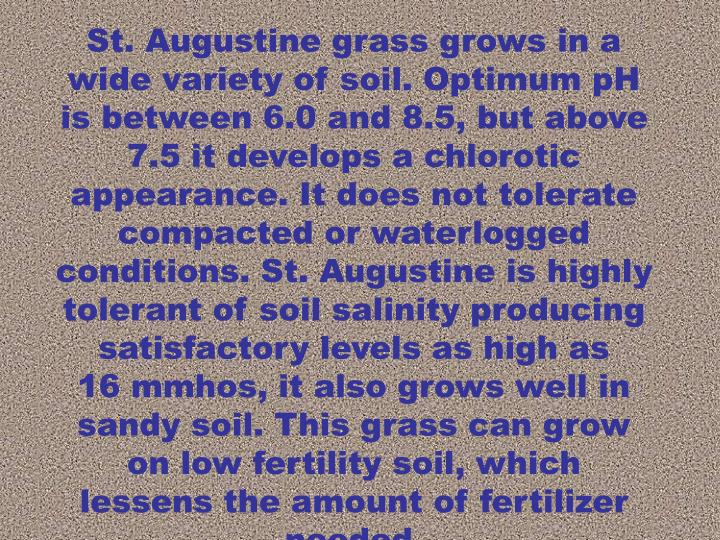 St. Augustine grass grows in a wide variety of soil. Optimum pH is between 6.0 and 8.5, but above 7.5 it develops a chlorotic appearance. It does not tolerate compacted or waterlogged conditions. St. Augustine is highly tolerant of soil salinity producing satisfactory levels as high as     16 mmhos, it also grows well in sandy soil. This grass can grow on low fertility soil, which lessens the amount of fertilizer needed.