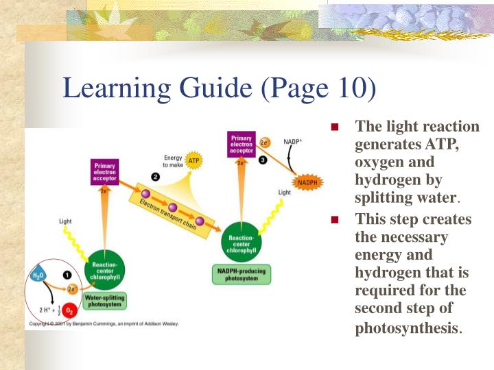 Learning Guide (Page 10)