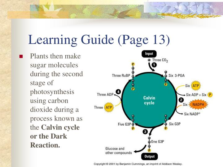 Learning Guide (Page 13)