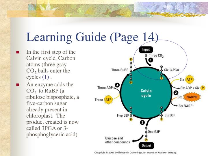 Learning Guide (Page 14)