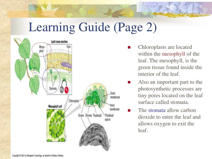 Learning Guide (Page 2)