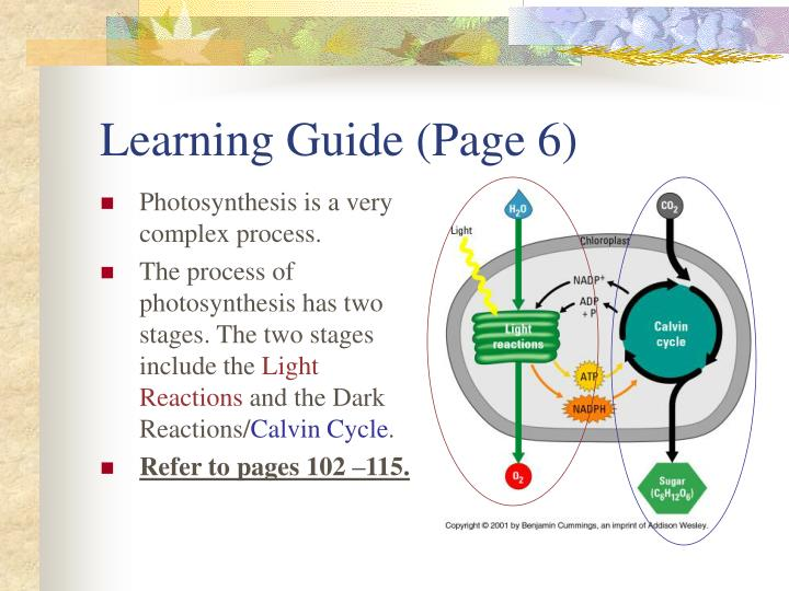Learning Guide (Page 6)