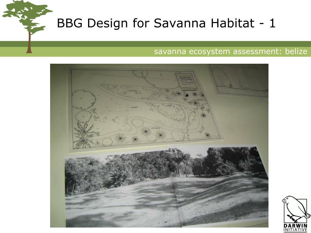 BBG Design for Savanna Habitat - 1