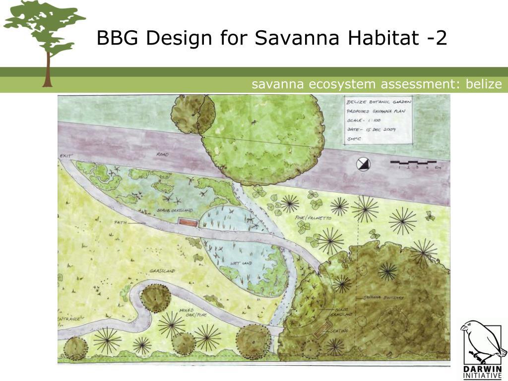 BBG Design for Savanna Habitat -2