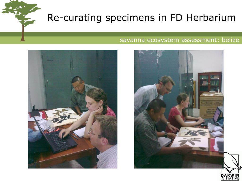 Re-curating specimens in FD Herbarium