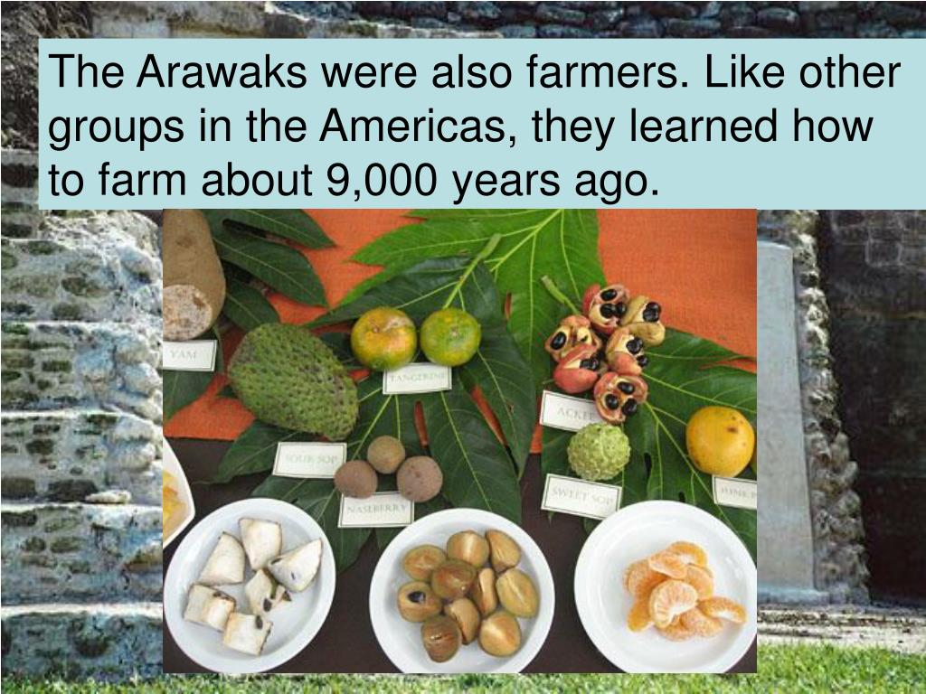 The Arawaks were also farmers. Like other groups in the Americas, they learned how to farm about 9,000 years ago.