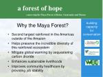 why the maya forest
