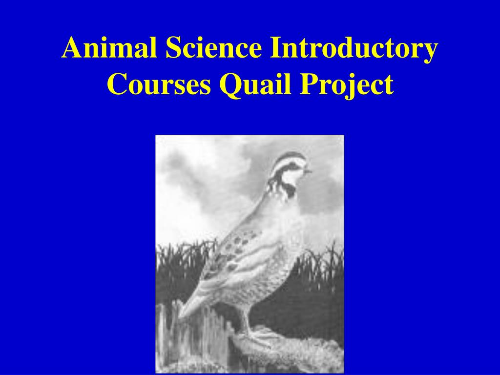 Animal Science Introductory Courses Quail Project