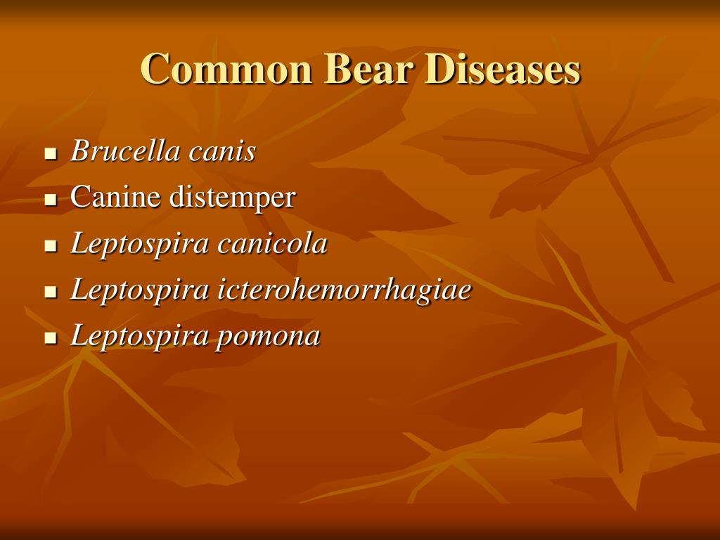 Common Bear Diseases