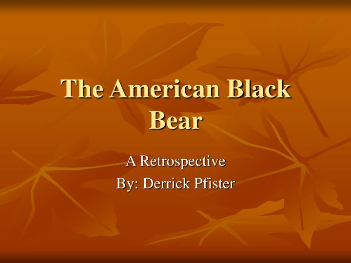 The american black bear