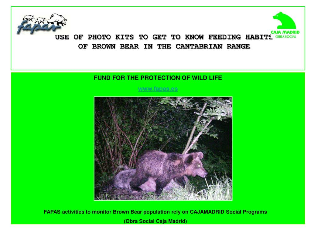 USE OF PHOTO KITS TO GET TO KNOW FEEDING HABITS OF BROWN BEAR IN THE CANTABRIAN RANGE