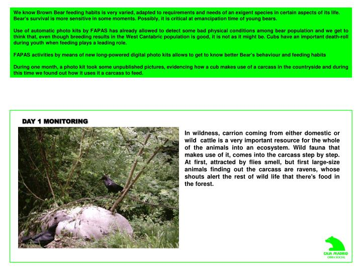 We know Brown Bear feeding habits is very varied, adapted to requirements and needs of an exigent sp...