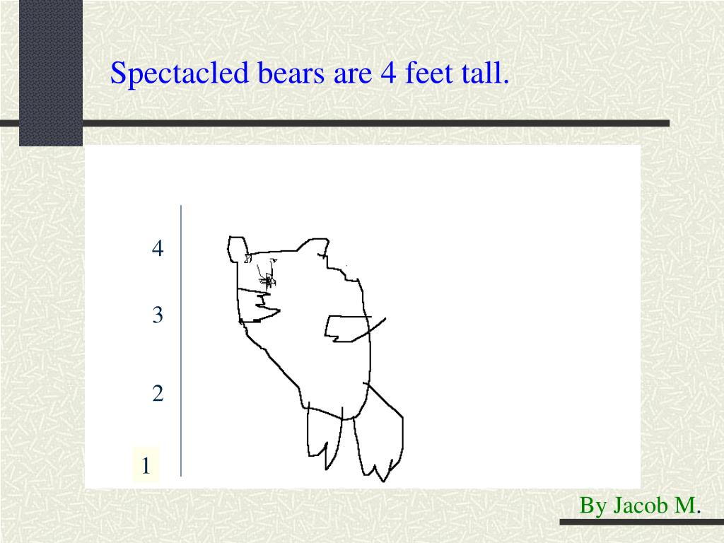 Spectacled bears are 4 feet tall.