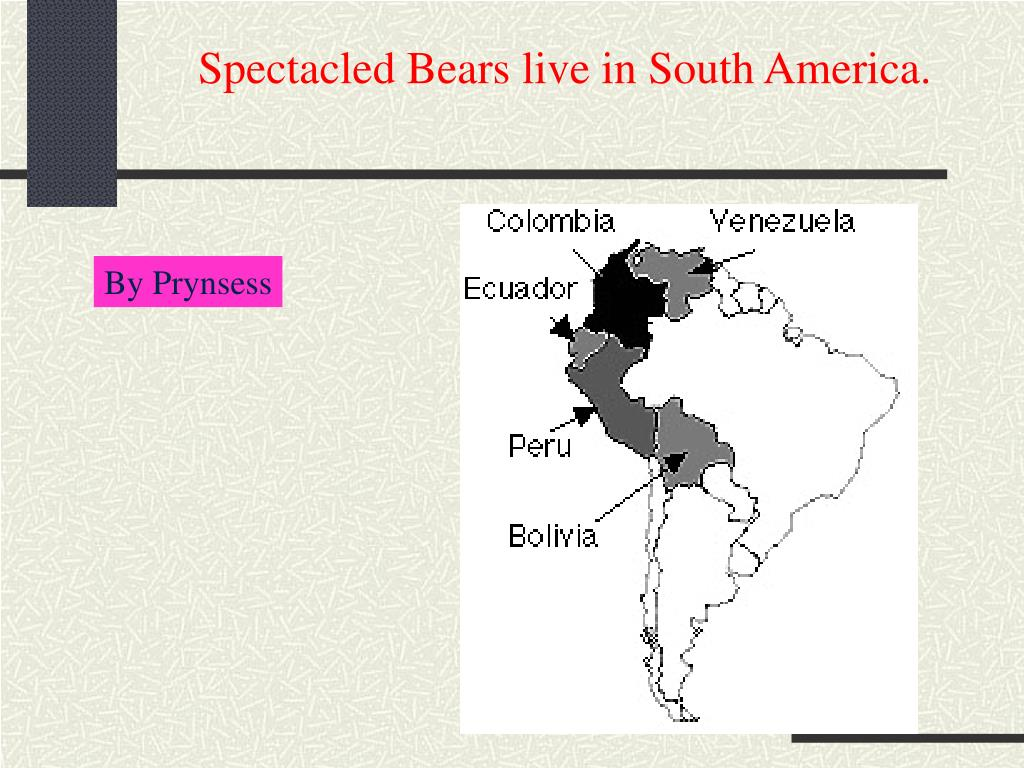 Spectacled Bears live in South America.