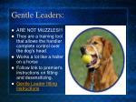 gentle leaders
