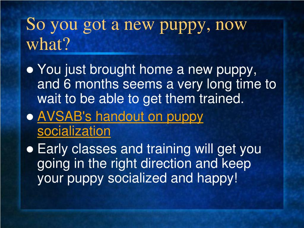 So you got a new puppy, now what?