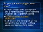 so you got a new puppy now what