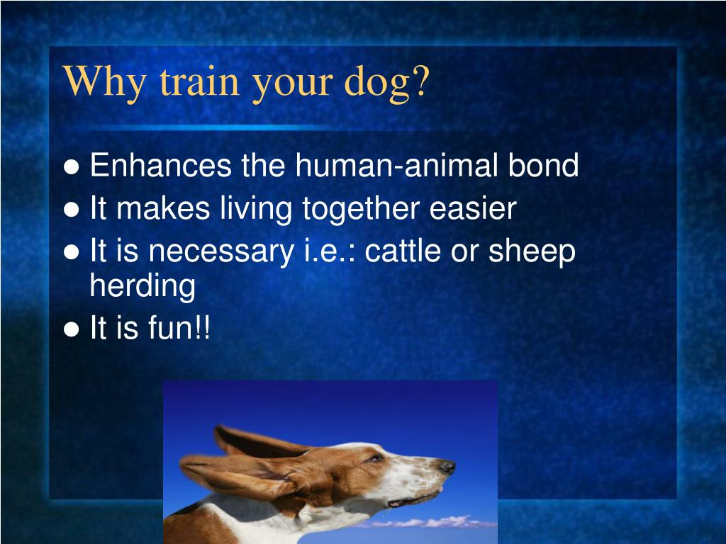 Why train your dog?