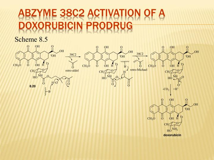 Abzyme 38C2 Activation of a Doxorubicin Prodrug