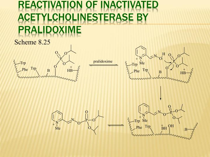 Reactivation of Inactivated Acetylcholinesterase by Pralidoxime