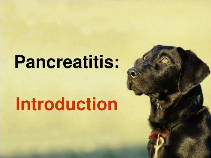 Pancreatitis introduction