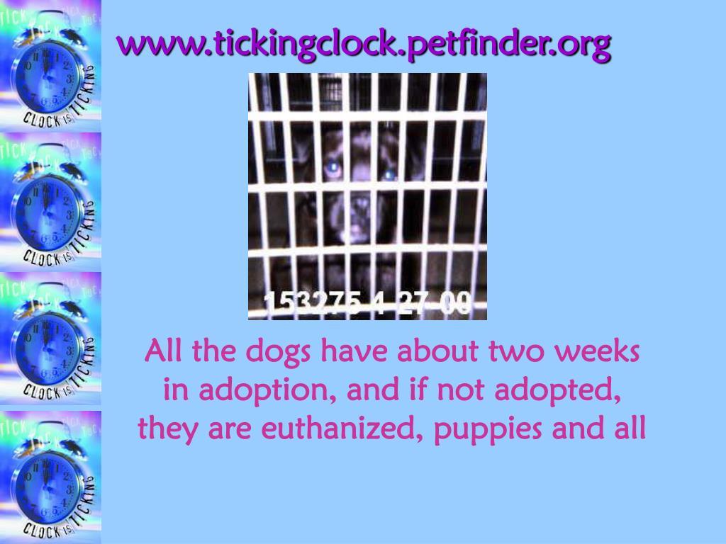 www.tickingclock.petfinder.org